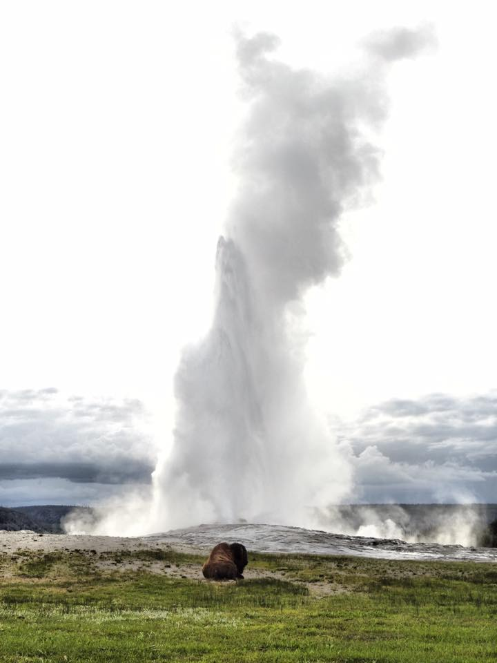 Oldh Faithful, Yellowstone