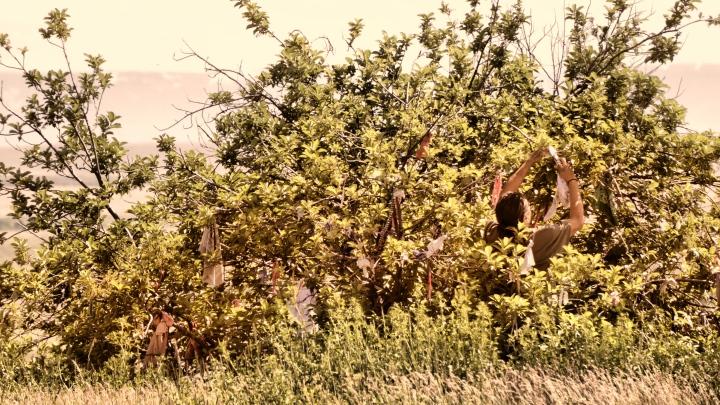 L'albero del Ricordo a Little BigHorn