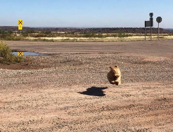 C'e un cane che vola sulla Route66