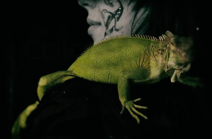 L'iguana, una storiavera.